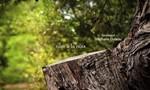 Minuscule : La Vie privée des insectes 2x34 ● Ruse à la noix