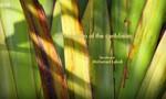 Minuscule : La Vie privée des insectes 2x58 ● Moustique des Caraïbes