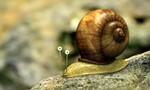 Minuscule : La Vie privée des insectes 2x67 ● Somnambule
