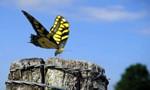Minuscule : La Vie privée des insectes 2x87 ● Hop-là !