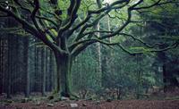 Soirée Brocéliande : Au coeur des Légendes mystiques et Fantastiques