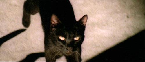 Black Cat 01