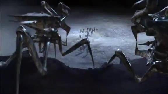 Insectes sur la colline