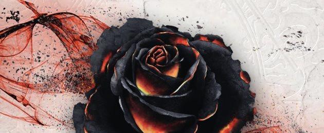 Black Rose Wars [2019]