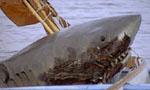 Voir la fiche Les Dents de la Mer 2 [1979]