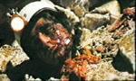 Voir la fiche Alien : Le monstre attaque [1981]
