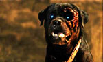Voir la critique de Rottweiler : L'un des rares film de chien