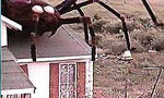 Voir la fiche L'Invasion des Araignées Géantes [1976]