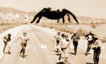 Voir la critique de Tarantula! : Gaffe, une tarentule géante arrive !