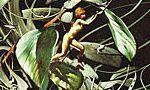 Voir la critique de Le Monde vert : Les aventures de Gren et de la morille