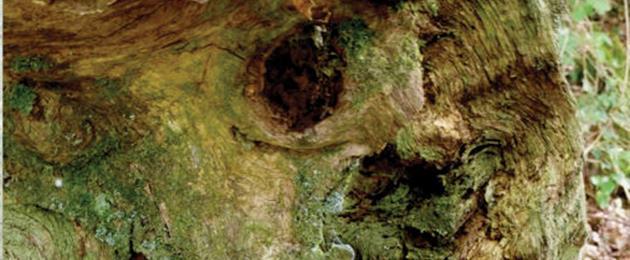 Entretien avec Thomas Munier pour le jeu de rôle Inflorenza : Plongerez-vous dans l'enfer forestier de Millevaux ?...